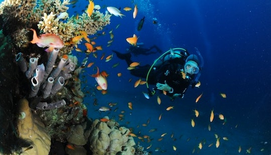 Escape To Another World While Diving!