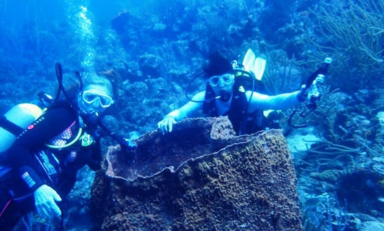 Diving Trips In Jan Thiel, Curacao