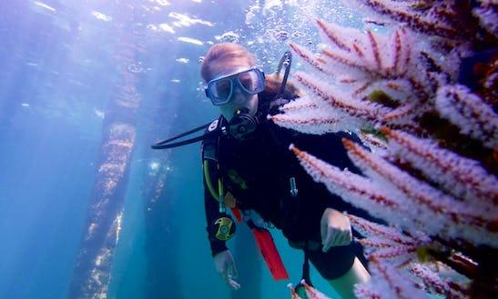 Diving Trips In Busselton, Australia