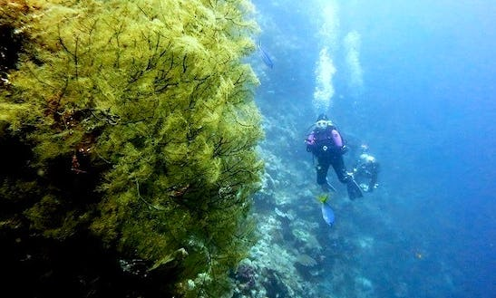 Diving In Sulawesi - Indonesia