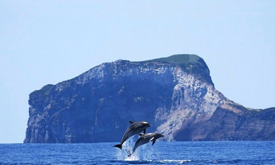 Snorkeling, Swimming W/dolphins, Diving In Horta