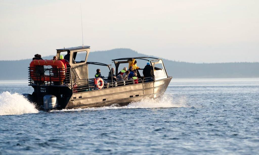 "38' ""The Blackfish Express"" Tours in Eastsound, Washington"