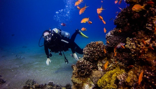 Introductory Diving Lessons For Beginners In Eilat, Israel