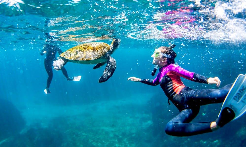 Snorkeling Tour in Eilat