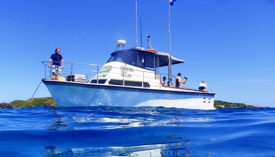 Whale Watching And Wildlife Tour In Narooma