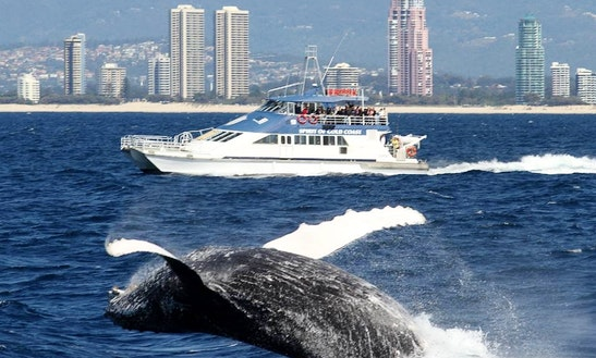 Captained Whale Watching Tours On 45'