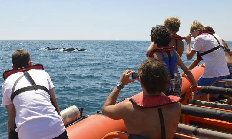 Whale Watching in Albufeira, faro