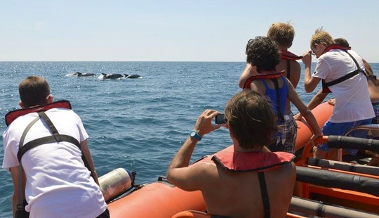 Whale Watching In Albufeira, Faro