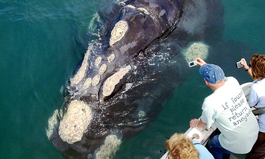Whale Watching Eco Tour In Gansbaai