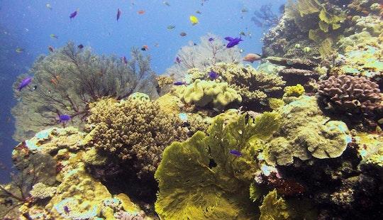 Diving In Hienghène - New Caledonia