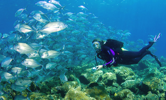 Diving Tour In Kuala Besut