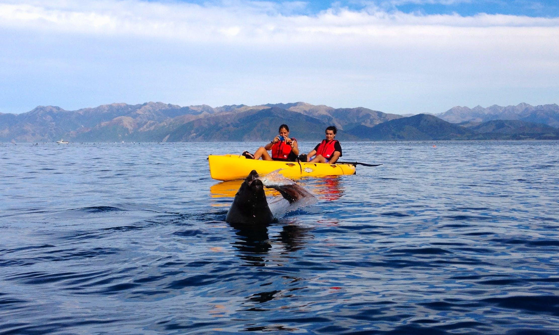 Kayaking Seal & Sunset Tours in South Bay