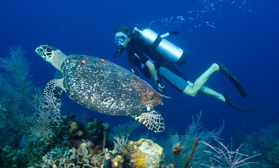 Diving Trips And Padi Courses In Bali