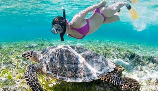 Snorkeling Trips  In Puerto Princesa