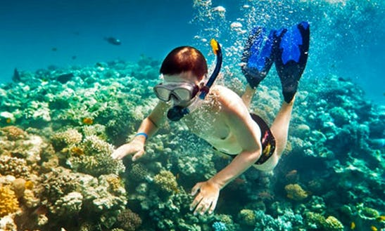 Snorkeling Tour With Experienced Guide In Indonesian Sea