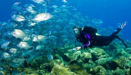 Diving Trips In Denpasar Timur