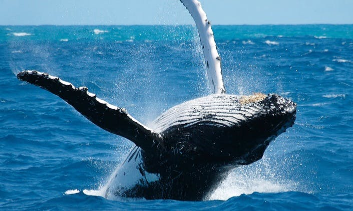 Whale Watching Tours in Onna-son