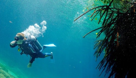Join Our Talented Instructors On An Underwater Adventure In Quintana Roo, Mexico