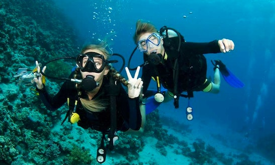 Diving Trips And Courses In Dunedin