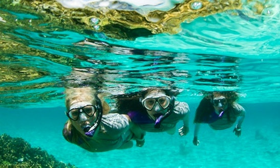 Discover Snorkelling Experience In Dunedin