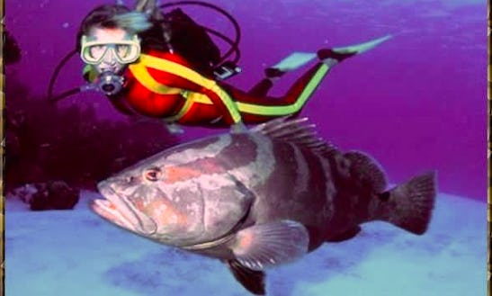 Diving Trips And Lessons In Flowers Bay