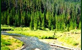 Fishing Adventure in Gallatin Gateway, Montana