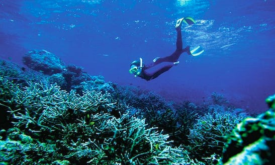 Diving Trips In Sandstone Point