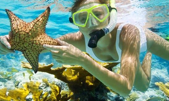 Snorkeling Trips In Key West