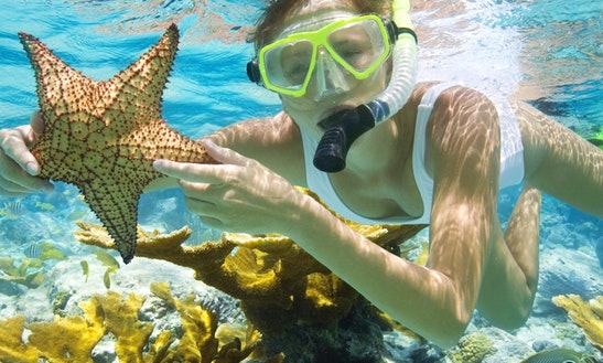 Snorkeling Trips In Key West