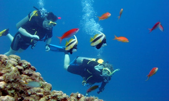 Diving Trips And Courses In Beruwala