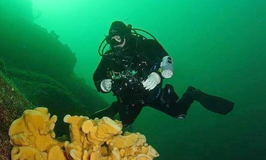 Diving Trips And Padi Courses In Burnaby