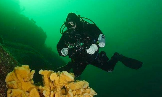 Diving Trips & Padi Courses In Burnaby