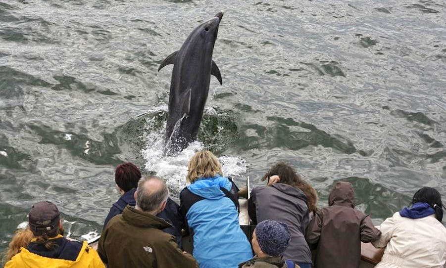 Dolphin and Nature Boat Trip in Carrigaholt