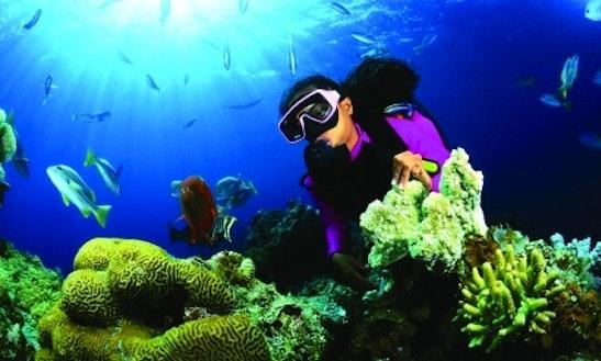 Diving Trips In Kalpitiya