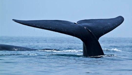 Whale Watching Tour In Kalpitiya