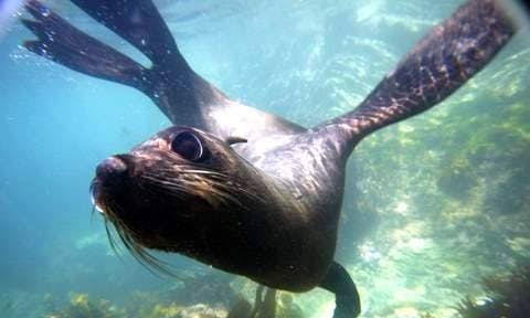 Seal Swim Tour in Kaikoura