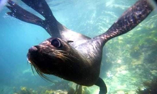Seal Swim Tour In Kaikoura