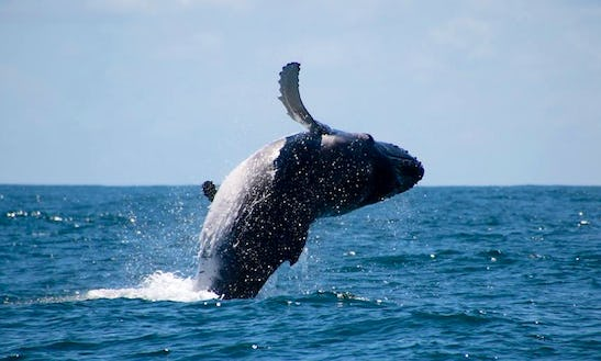Whale Watching Tour In Byron Bay