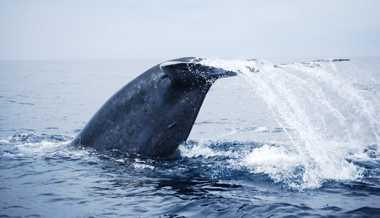 Dolphin Tour In Negombo