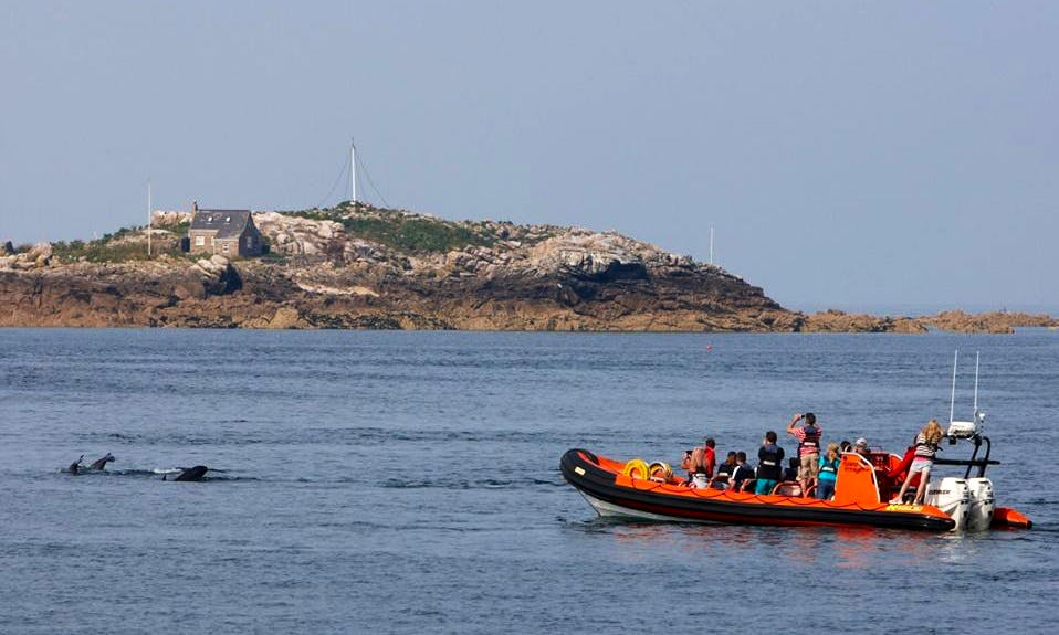 Island Sightseeing RIB Tours in Helier