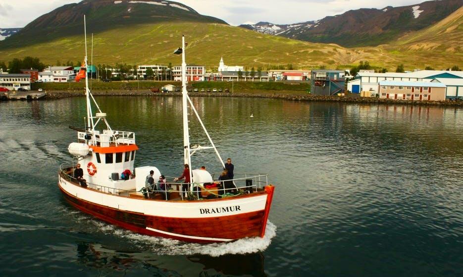 Whale Watching in Dalvík