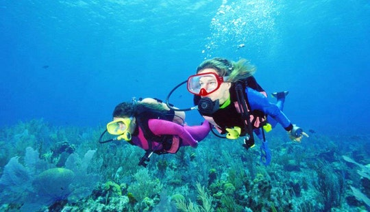Diving Trips And Courses In Hong Kong