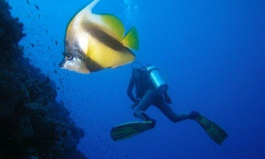 Book A Diving Trips On Famous Dive Sites In Dahab, Egypt