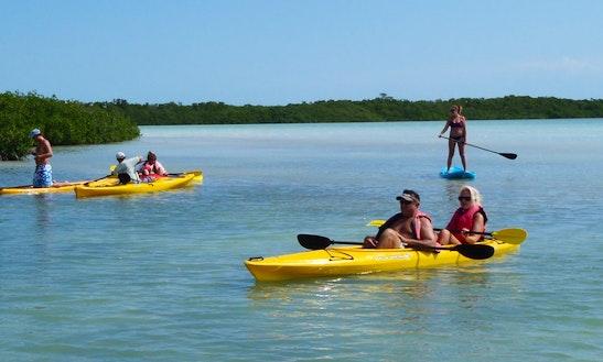 Double Kayak Rental In Islamorada