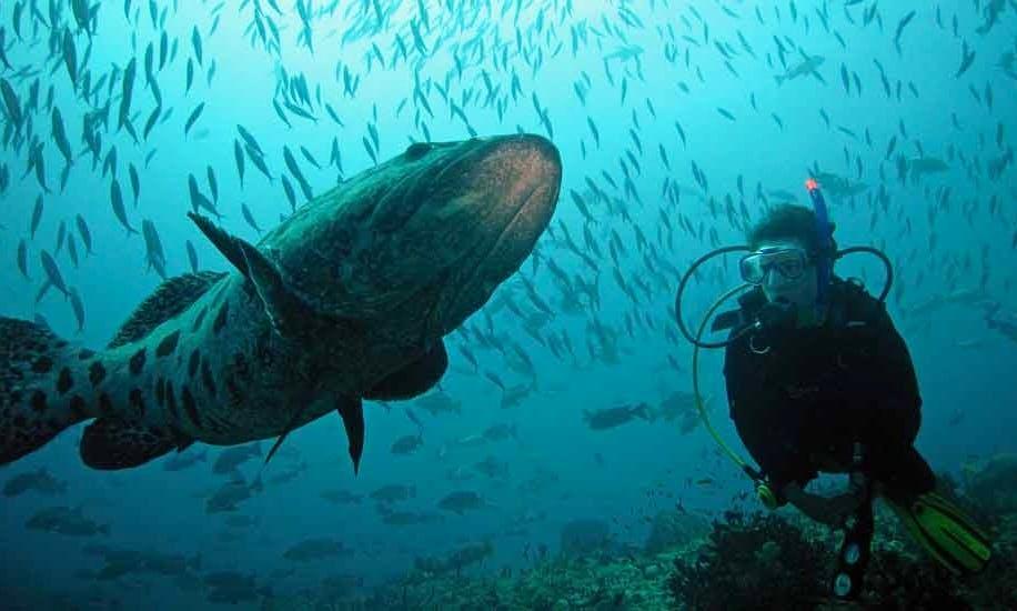 Diving in Port Blair