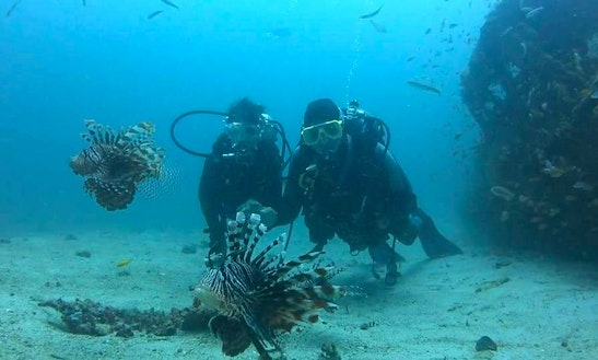 Diving And Diving Courses In Puerto Galera