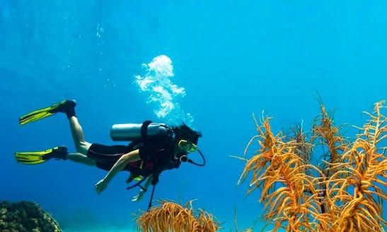 Diving Trips In Bentota