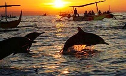 Dolphin Tour in Denpasar