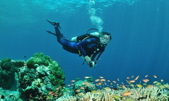 Diving Trips And Courses In Mersing