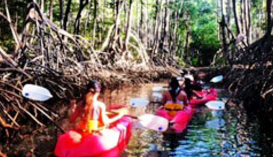 Try Our Kayak Rentals & Tours In Puntarenas, Costa Rica